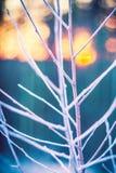 Baumzweige im Frost Stockbilder
