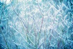Baumzweige im Frost Lizenzfreies Stockbild