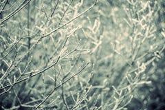 Baumzweige im Frost Lizenzfreie Stockfotografie