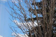 Baumzweige mit Blättern mit bewölktem stockfotografie