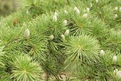 Baumzweige mit Blättern mit bewölktem Lizenzfreie Stockbilder