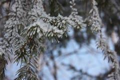 Baumzweige mit Blättern mit bewölktem Natürlicher Hintergrund Lizenzfreie Stockfotos