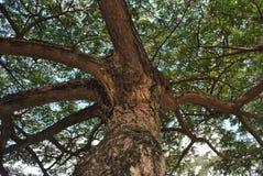 Baumzweige mit Blättern mit bewölktem Lizenzfreie Stockfotografie