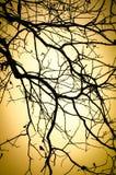 Baumzweige mit Blättern mit bewölktem Lizenzfreies Stockbild