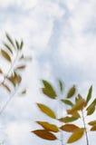 Baumzweige mit Blättern mit bewölktem Stockbilder