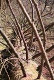 Baumzweige mit Blättern mit bewölktem Stockbild