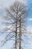 Baumzweige mit Blättern mit bewölktem Stockfoto