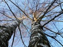 Baumzweige mit Blättern mit bewölktem Lizenzfreies Stockfoto
