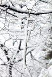 Baumzweige umfaßt durch Schnee Stockfotos