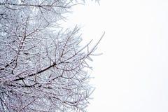 Baumzweige umfaßt durch Schnee Lizenzfreie Stockbilder