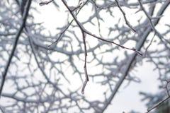Baumzweige umfaßt durch Schnee Stockbild