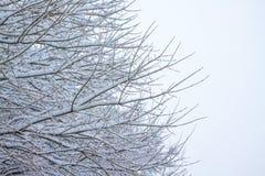 Baumzweige umfaßt durch Schnee Lizenzfreies Stockfoto