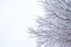 Baumzweige umfaßt durch Schnee Lizenzfreie Stockfotografie