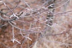 Baumzweige umfaßt mit Hoarfrost Lizenzfreies Stockfoto