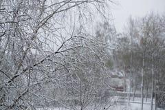 Baumzweige umfaßt mit Schnee Stockfotografie