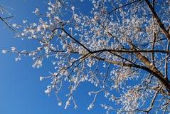 Baumzweige umfaßt mit Schnee Lizenzfreie Stockbilder