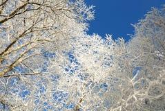 Baumzweige umfaßt mit Schnee Lizenzfreie Stockfotos