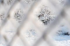 Baumzweige umfaßt mit Schnee Ansicht durch den rostigen Maschendrahtzaun bedeckt mit Reif Stockfotos