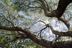 Baumzweige und -himmel Stockbilder