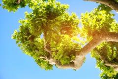 Baumzweige und -himmel Stockfoto