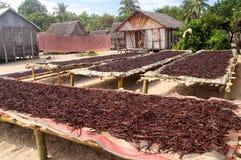 Baunilha de Madagascar Fotografia de Stock