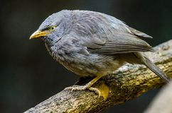 Bavard commun - oiseau Photographie stock libre de droits
