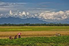 Bavardage heureux d'agriculteurs de rizière Images stock