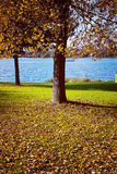 Bavaria autumnal colors, blue lake and golden leaves under trees Royalty Free Stock Photo