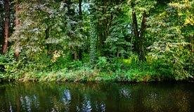 Bavaria countryside, woodland, vegetation and foliage on riverba Royalty Free Stock Images