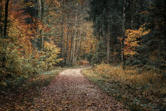 bavaria fussen germany höstlig skog arkivfoto