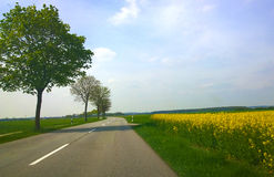 Bavaria - springtime, country road among fields with trees and y Stock Photo