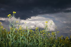 Bavaria,View of storm clouds over rape field Royalty Free Stock Photo