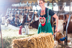 Bavaria woman driving pushcart in cow barn. Bavarian woman driving pushcard with hay bale and German Lebkuchen through cowhouse Stock Image