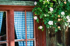Bavarian alpine cottage. Idyllic Bavarian alpine cottage - window with curtains and wild roses Royalty Free Stock Photography