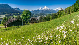 Bavarian Alps with beautiful flowers and Watzmann in springtime, Bavaria, Germany Stock Image