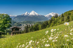 Bavarian Alps with beautiful flowers and Watzmann in springtime Royalty Free Stock Photo