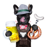 Bavarian beer celebration dog Royalty Free Stock Photos