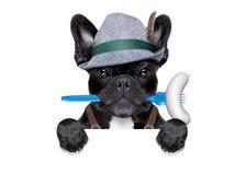 Bavarian beer celebration dog Stock Image