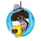 Bavarian beer dachshund sausage dog Royalty Free Stock Photography