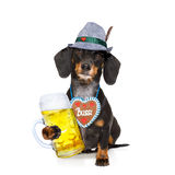 Bavarian beer dachshund sausage dog Stock Images