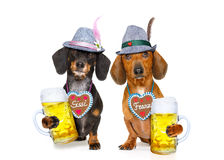 Bavarian beer dachshund sausage dogs ,  couple of two Royalty Free Stock Photo