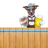 Bavarian beer dog Stock Photography