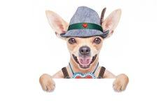 Bavarian beer dog Royalty Free Stock Photos