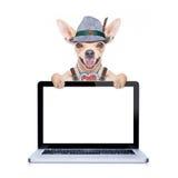 Bavarian beer dog Royalty Free Stock Photography