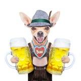 Bavarian beer dog Royalty Free Stock Image