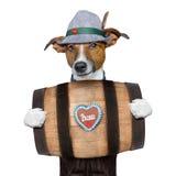 Bavarian beer dog Stock Images