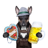 Bavarian beer dog Royalty Free Stock Image