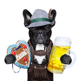Bavarian beer dog Stock Photos