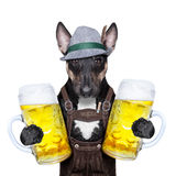 Bavarian beer dog Royalty Free Stock Photos