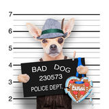 Bavarian beer mugshot dog Stock Photo